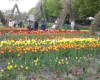 Lookout mountain in the Britz Garden