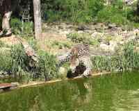 Santa Cruz Municipal Zoo