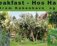 Bed & Breakfast - Hos Hanne Bach