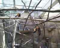 Small Mammal House