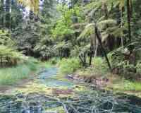 Puarenga Park